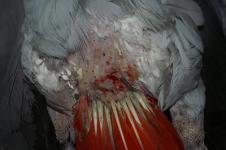 wound management