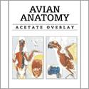 anatomie complète du perroquet